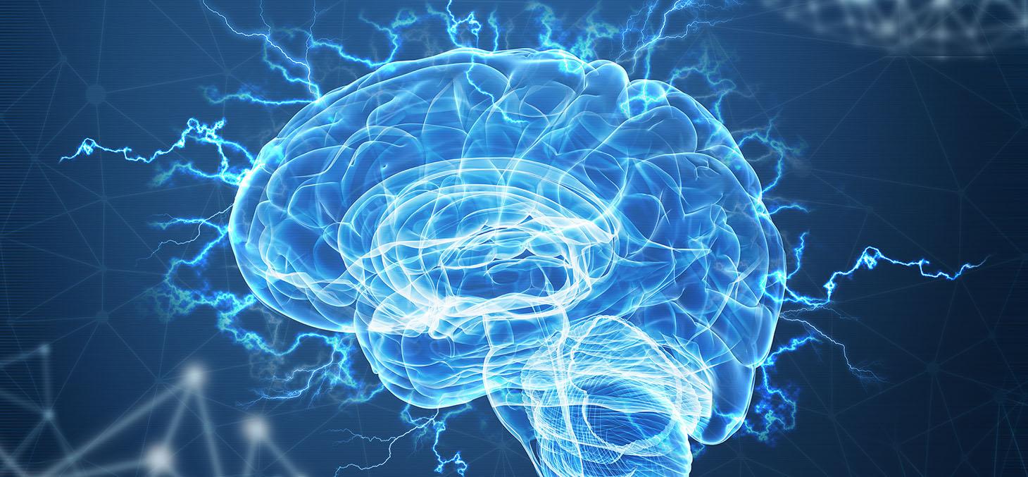 Cerveau et orientation politique