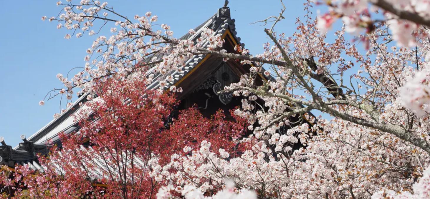 Temple Ninna-ji, à Kyoto en mars 2021. M.P-Traversaz, CC BY-NC-ND