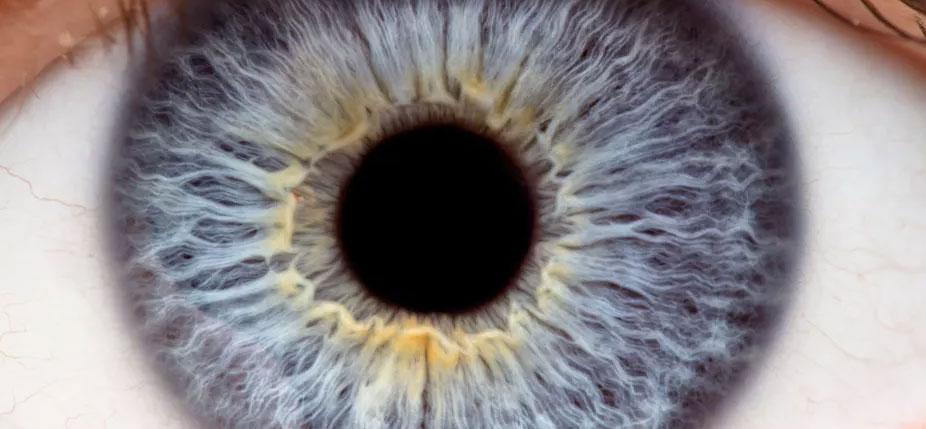 Longtemps, le glaucome demeure invisible. Il ne se révèle souvent que lorsqu'il est trop tard. © Shutterstock