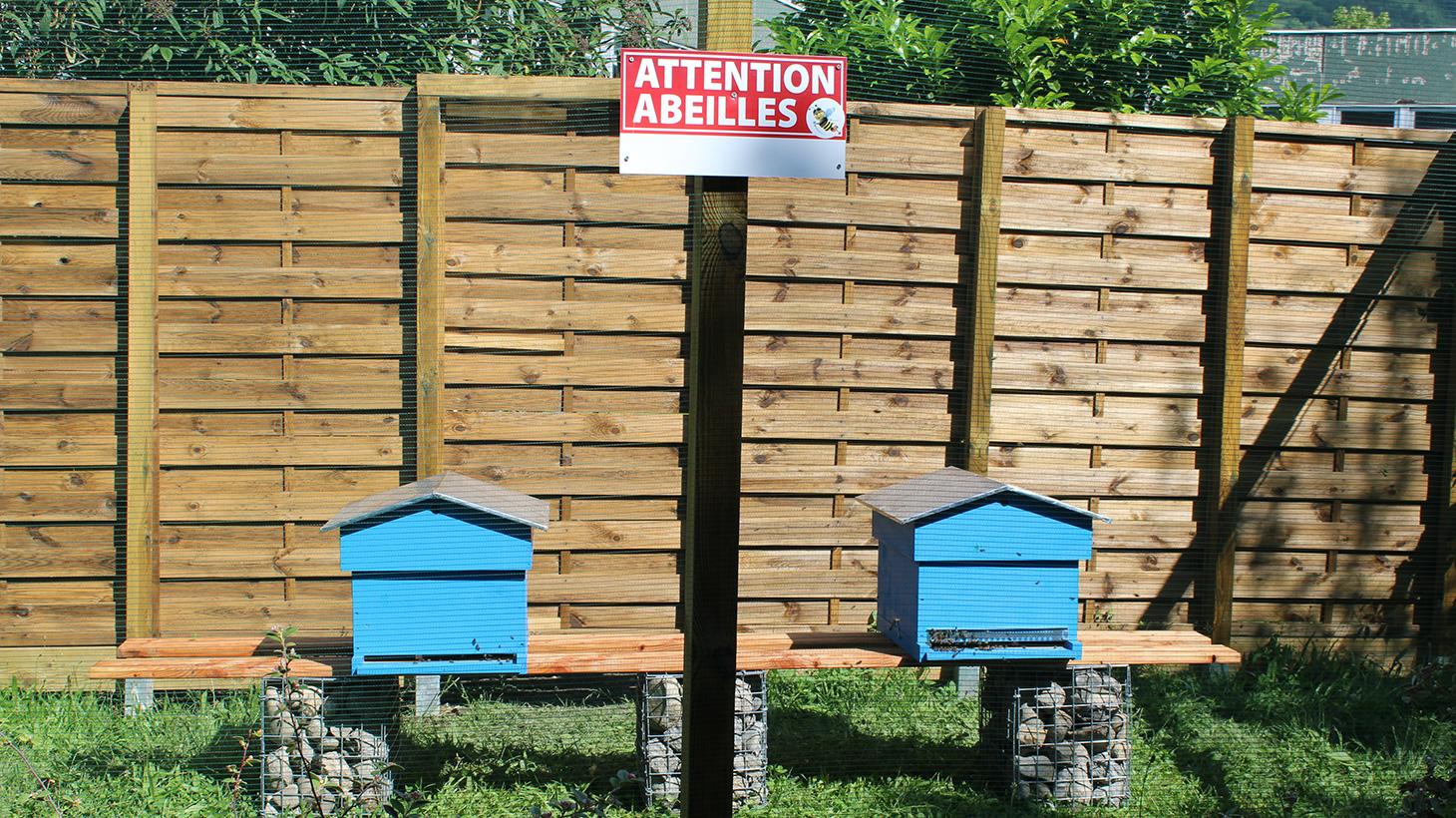 Les abeilles se repèrent avant de prendre leur envol