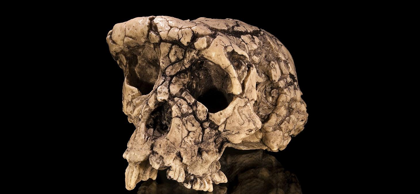 Stéréolithographie du crâne de Toumaï