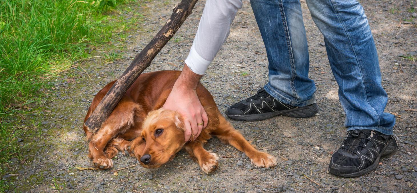 Un faisceau d'indices concordants semble indiquer que les individus violents envers les animaux ont tendance à l'être envers les êtres humains. Shutterstock